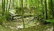 Wald-w050-h050-cut