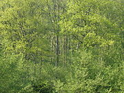 Wald4536