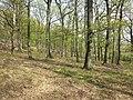 Wald zwischen Gaubitsch, Gnadendorf und Friebritz sl2.jpg