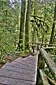 Walkway Capilano Park Vancouver British Columbia Canada 01.jpg