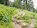Wanderweg zwischen Feldberg und Baldenweger Hütte - panoramio (2).jpg