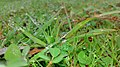 Water droplets on the lawn.jpg