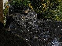 Water frozen in time.JPG