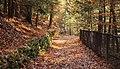 Watkins Glenn Rim Trail (25376852969).jpg