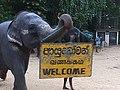 Welcome in Sri Lanka.jpg