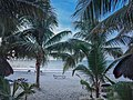 Whale shark Holbox island Mexico Walhai (19991264510).jpg