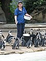 Who will be the lucky penguin? (540062728).jpg
