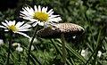Wildflowers & Fungi (3573228887).jpg