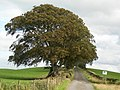Wind-shaped trees at Attiquin Farm - geograph.org.uk - 239188.jpg
