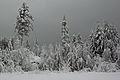 Winter forest silver.jpg