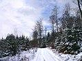 Winter im Teutoburger Wald17.jpg