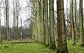 Winter woodland near Ballymena - geograph.org.uk - 642864.jpg