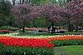 Wiosenny ogród Keukenhof w Lisse-Holandia. - panoramio (17).jpg