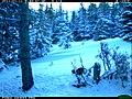 Wolverine - Trail Camera Picture (5489849822).jpg