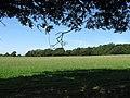 Wood Field - geograph.org.uk - 1456445.jpg