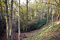 Woodland on north west end of Rednal Hill - geograph.org.uk - 336798.jpg