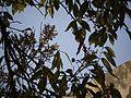 Wumb (Konkani- वुंब) (5598051799).jpg