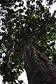 Yavatmal, Maharashtra, India - panoramio (1).jpg