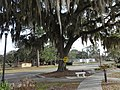 Yellow ribbon around Oak Tree, Veterans Memorial Park (Perry, Florida).JPG