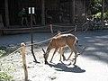 Yosemite 2011 (5994808321).jpg