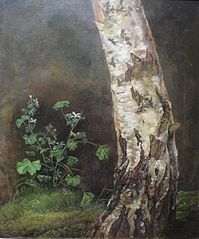 Study of the Lower Trunk of a Birch Tree