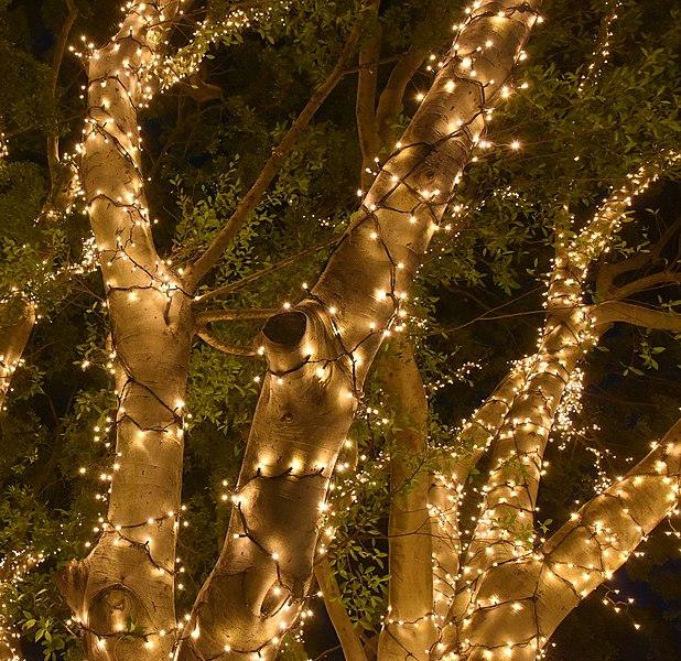 File:(1)Fairy lights UNSW-3.jpg