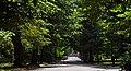 Алея в парку Шевченка (Чернівці) DSC 9514.jpg