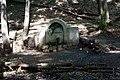 Белочка на Серебряном роднике - panoramio.jpg