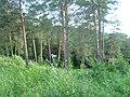 Вид с Андроновских гор, начало июля 2011 - panoramio (1).jpg