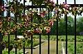 Главный ботанический сад им. Н.В. Цицина, весна 2019. Фото 3.jpg