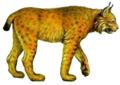 Евразийская рысь.png