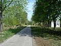 Заброшенная военная дорога - panoramio.jpg