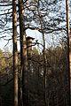 Камінне село, березень, вулик 1.jpg