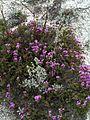 Крейдяні відслонення Artemisia hololeuca & Thymus calcareus.jpg