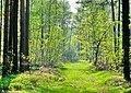 Лес в урочище Барнатово. (Forest tract in Barnatovo) - panoramio.jpg