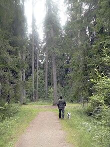 Перечисли живые организмы которые встречаются в лесу