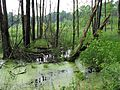 Начало болота - panoramio.jpg