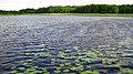Озеро Солинка. Акваторія.jpg