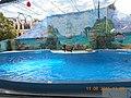 Сочинский дельфинарий парка «Ривьера». 26.jpg
