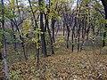 Украина, Киев - Голосеевский лес 76.jpg