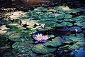 Цветок ботанического сада 10.jpg