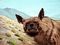 حیوانات تاکسی درمی شده - موزه تاریخ طبیعی شهر قم 16.jpg