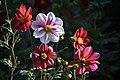 عکس از گلها و گیاهان باغ بوتانیکال تفلیس - گرجستان 38.jpg