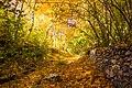 پاییزدر ایران-قاهان قم-Autumn in iran-qom 11.jpg