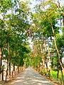 তেলিগাতি টু অভয়পাশা রোড, আটপাড়া, নেত্রকোণা.jpg