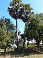หมู่บ้าน นาพิพาน ต.ปะโค เมือง หนองคาย - panoramio (21).jpg