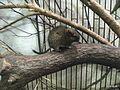上野動物公園, Ueno Zoo(Ueno Zoological Gardens) - panoramio (42).jpg