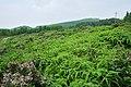 后山的风景 - panoramio - jiang-wen-jie.jpg