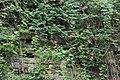 墙之花 - panoramio.jpg
