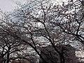 天神川高辻 - panoramio (6).jpg